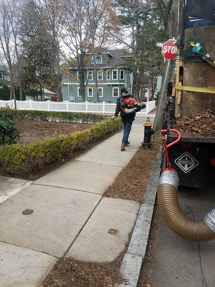 expert-leaf-clean-up-services-in-boston-ma_1_orig