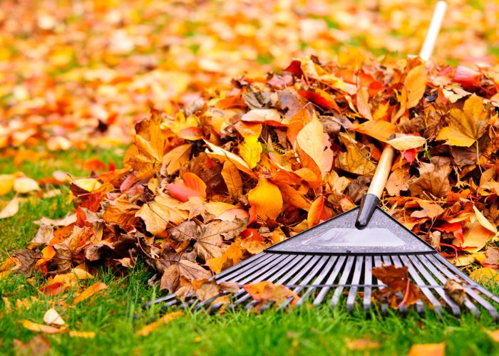 fall cleanup landscaping Boston