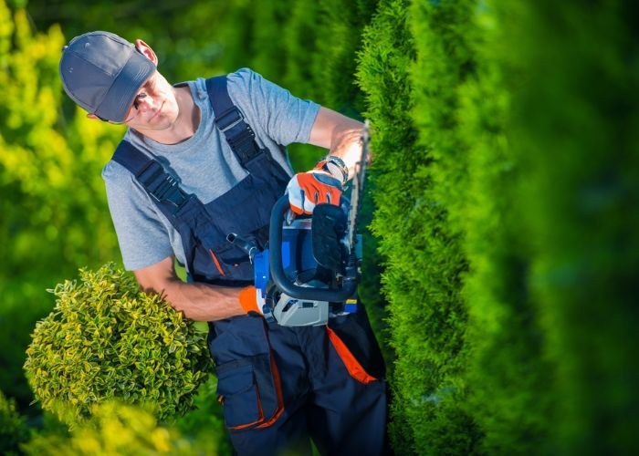 landscaper using hedge trimming to landscape local property in Boston